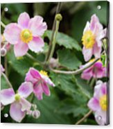 Pink Flowers Over Green Acrylic Print
