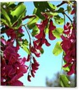 Pink Flowers Virginia City Nv Acrylic Print