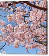 Pink Fluffy Branches Acrylic Print