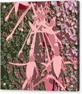Pink Fuschia Against Tree Bark Acrylic Print
