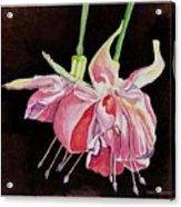 Pink Fuscia Acrylic Print