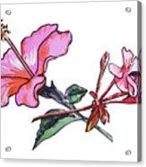 Pink Hibiscus And Geranium  Acrylic Print