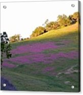 Pink Hills Acrylic Print
