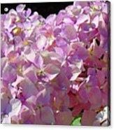 Pink Hydrangea Flower Floral Art Prints Baslee Troutman Acrylic Print