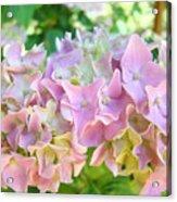 Pink Hydrangea Flower Garden Art Prints Baslee Troutman Acrylic Print