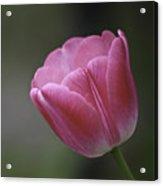 Pink Impression Squared 1 Acrylic Print