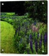 Pink In The Lupine Margin Acrylic Print