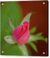 Pink Knockout Rose Acrylic Print