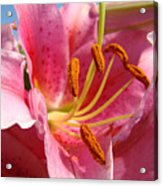 Pink Lilies Art Prints Lily Flowers 3 Giclee Artwork Baslee Troutman  Acrylic Print