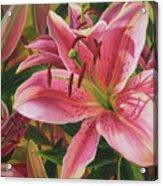 Pink Liliums Acrylic Print