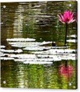 Pink Lily 12 Acrylic Print