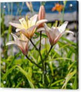 Pink Lily By The Lake Acrylic Print