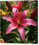 Pink Lily Lush Garden Acrylic Print