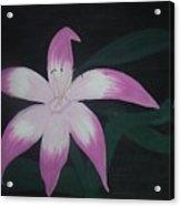 Pink Lily Acrylic Print by Melanie Blankenship