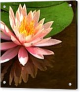 Pink Lily Reflection 4 Acrylic Print