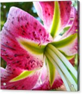 Pink Lily Summer Botanical Garden Art Prints Baslee Troutman Acrylic Print