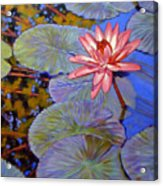 Pink Lily With Silver Pads Acrylic Print