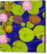 Pink Lotus Blossoms Acrylic Print