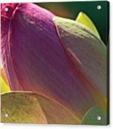 Pink Lotus Bud Acrylic Print