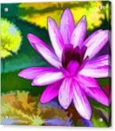 Pink Lotus Gallery  Acrylic Print