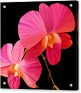 Pink Lux Acrylic Print