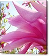 Pink Magnolia Flower Art Print Botanical Tree Baslee Troutman Acrylic Print