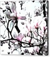 Pink Magnolia - In Black And White  Acrylic Print