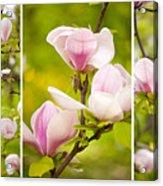 Pink Magnolia Triptych Acrylic Print
