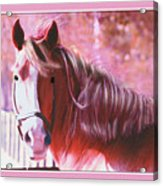 Pink Mare Acrylic Print