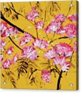 Pink Mimosa Tree Dark Yellow 201642 Acrylic Print