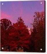 Pink Moonlite Night Acrylic Print