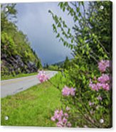 Pink On The Parkway Acrylic Print