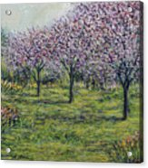 Pink Orchards Garden Acrylic Print