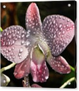 Pink Orchid And Dewdrops 013 Acrylic Print