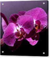 Pink Orchid Flowers Acrylic Print