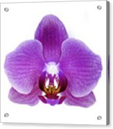 Pink Orchid On White Acrylic Print
