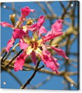 Pink Orchid Tree Acrylic Print