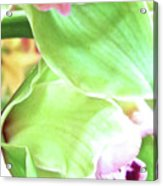 Pink Orchid With Green 1 Acrylic Print