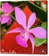 Pink Pair Acrylic Print