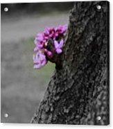Pink Peeking At You Acrylic Print