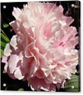 Pink Peony 2 Acrylic Print