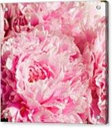 Pink Peony Bouquet Acrylic Print