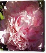 Pink Peony Acrylic Print