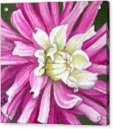 Pink Petal Blast Acrylic Print