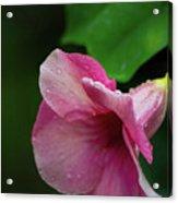 Pink Petals In The Rain Acrylic Print