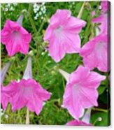 Pink Petunia Flower 9 Acrylic Print