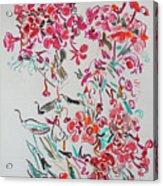 Pink Phloxes Acrylic Print