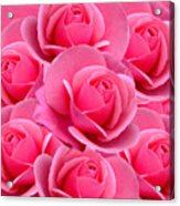 Pink Pink Roses Acrylic Print