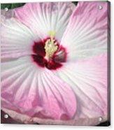 Pink Platter Acrylic Print