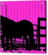 Pink Pony Acrylic Print